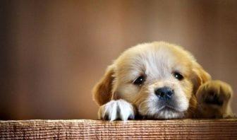 Consejos de Educación para Cachorros