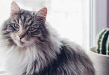 Consejos de Educación para Gatos