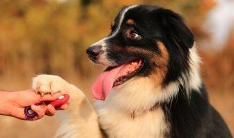 Métodos de Adiestramiento para Perros