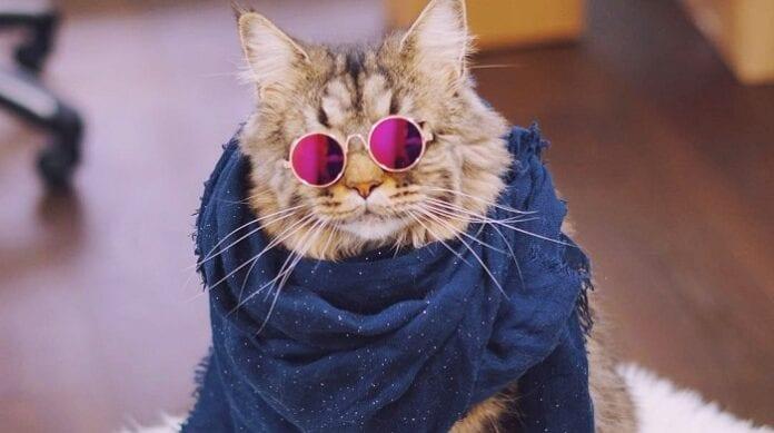 Belleza para Gatos Mimados