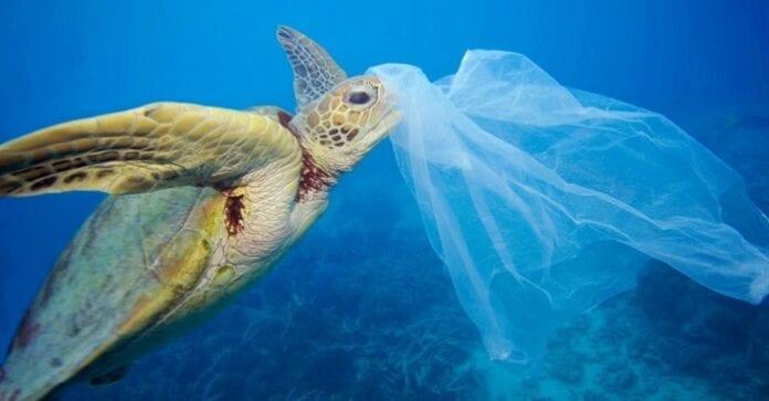 Impacto Ambiental de las Bolsas de Plástico