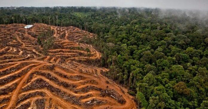 El Problema de la Deforestación