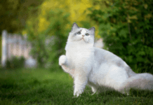 Enfermedades en la Piel de los Gatos