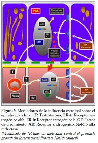 Mediadores de Influencia Estromal sobre el Epitelio Glandular