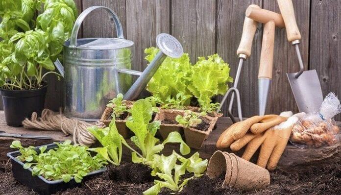 Cómo Hacer Abonos Caseros y Orgánicos para tus Plantas