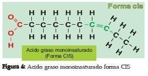 Ácido Graso Monoinsaturado forma CIS