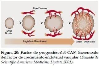 Incremento del factor de crecimiento Endotelial vascular