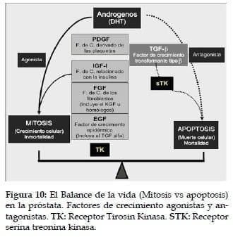 Balance de la vida (Mitosis vs apoptosis)