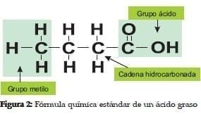 Fórmula química estándar de un Ácido Graso