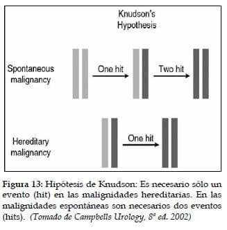 Hipótesis de Knudson
