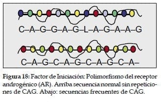 Polimorfismo del receptor Androgénico