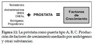 Próstata como puerta tipo A, B, C