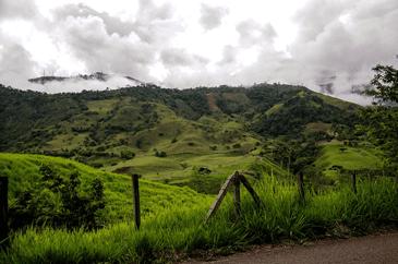 Zona cafetera en Colombia