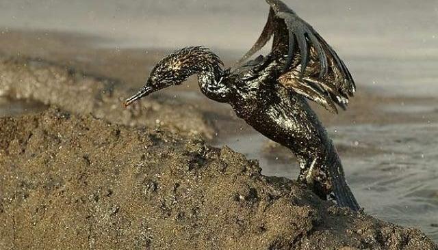 contaminación de la biodiversidad