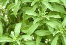 Stevia propiedades y beneficios