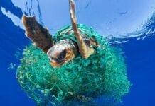 Contaminación de los Mares y Océanos