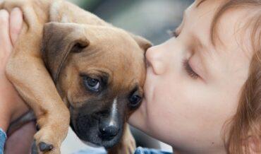 comprar o adoptar mascotas