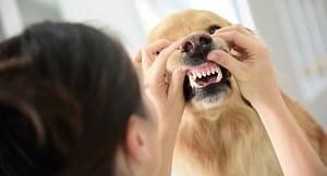 Higiene oral en las mascotas