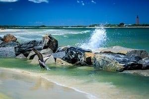 Playas New Smyrna Beach