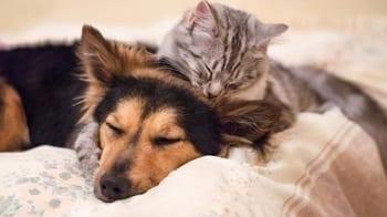 Consejos para Perro y Gato