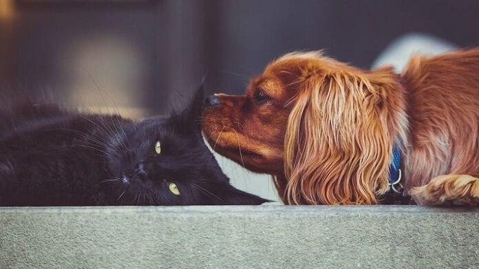 Consejos para que tu Perro y Gato se Lleven Bien