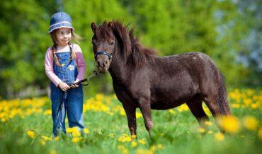 Cuidados del Pony
