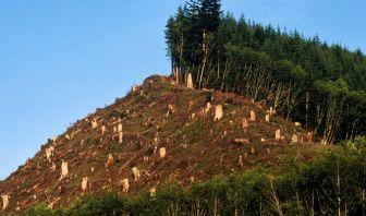Destrucción de los Bosques