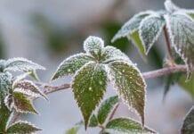 Consejos para Proteger las Plantas de las Heladas