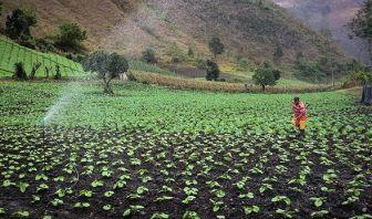 Ley 1876 - Innovación Agropecuaria