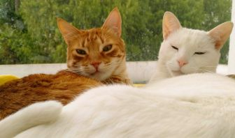 Falla Renal en Gatos