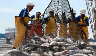 La soprepesca - Sobreexplotacion recursos marinos