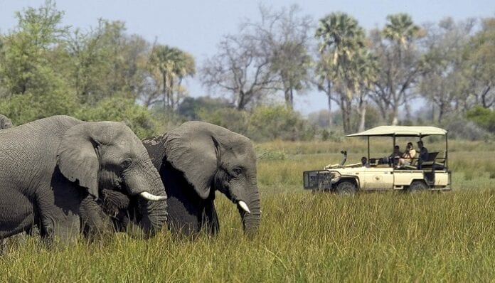 Los Mejores Lugares del Mundo para Irte de Safari