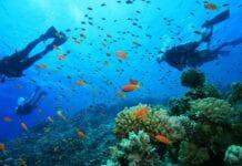 Las Mejores Playas en Colombia para Bucear o Hacer Snorkel