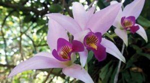 Orquideas - flores para regalar