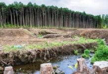 Sobreexplotación de los Recursos Naturales