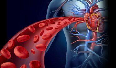 Fracciones Lipídicas de Colesterol y Triglicéridos