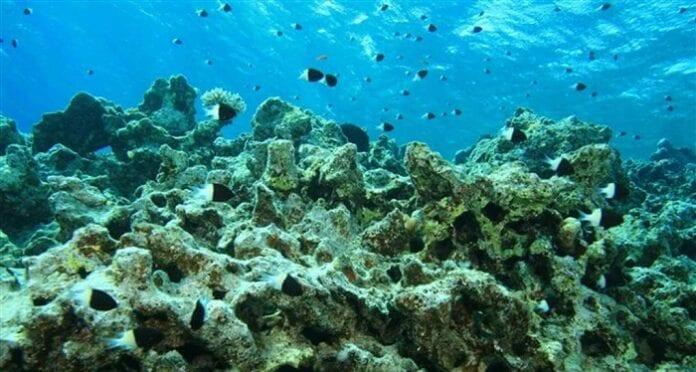 Acidificación De Los Océanos Acidez De Los Mares