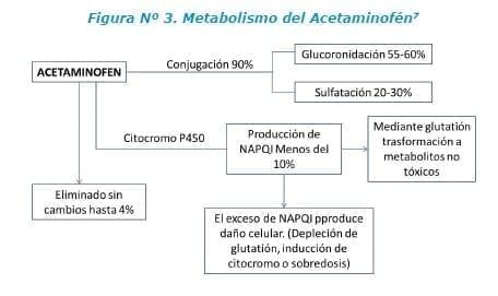 Metabolismo del Acetaminofén