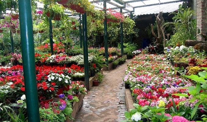 Resultado de imagen de flores ornamentales cultivo