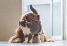 Reducir el Estrés en Perros y Gatos