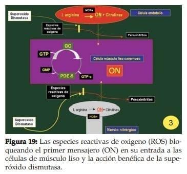 Las especies reactivas de oxigeno (ROS)