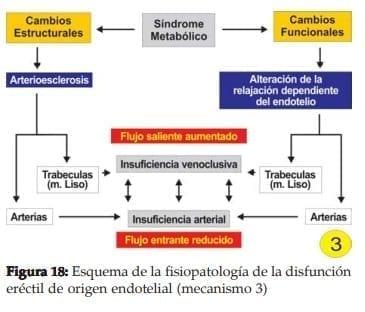 Fisiopatología de la disfunción eréctil de origen endotelial