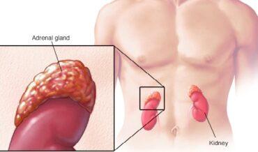 Glándula Adrenal