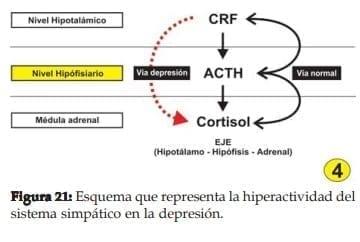 Hiperactividad del sistema simpático en la depresión