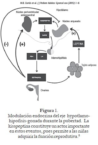 Modulación endocrina del eje hypotlamohipofisis- gonada