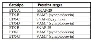 Proteínas sobre las que ejercen su acción las diferentes toxinas