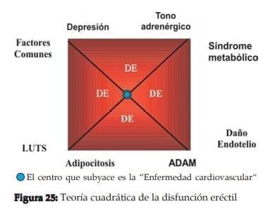 Teoría cuadrática de la disfunción eréctil
