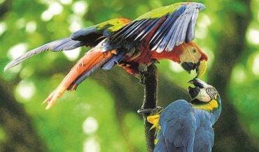 Fauna en Colombia
