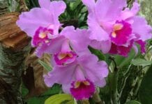Flora en Colombia