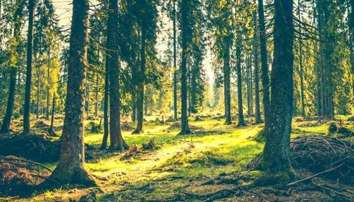 Silvicultura Ecológica